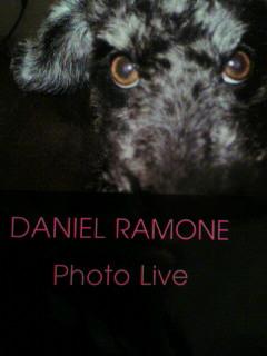 ロック犬ダニエル・ラモーン